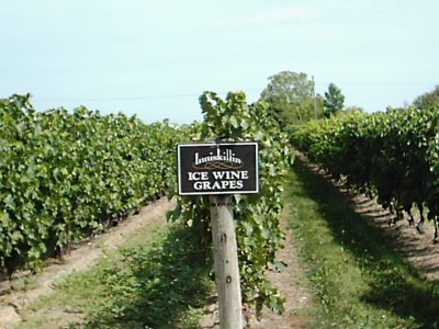 2005-0818-inniskill-ice-wine.jpg