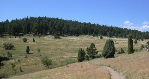 2003-0815-mt-falcon-park-denver-meadow-1.jpg