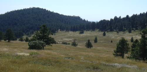 2003-0815-mt-falcon-park-denver-meadow-2.jpg
